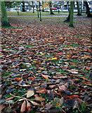 J5081 : Fallen leaves, Castle Park by Rossographer