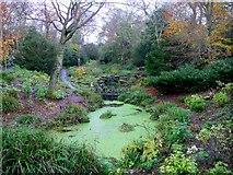 NZ2561 : The Dene, Saltwell Park by Andrew Curtis