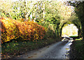 TM3097 : Colourful beech hedge in Wheelers Lane by Evelyn Simak
