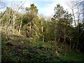 NZ4440 : Castle Eden Dene National Nature Reserve by Andrew Curtis