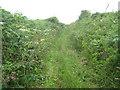 SW4124 : Overgrown path near Treverven by David Medcalf