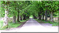 NN7423 : Avenue of lime trees  to   Whitehouse of Dunira, Perthshire by Anthony O'Neil