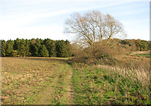 TG3204 : Unmarked path north of Low Common by Evelyn Simak