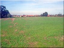 SK4864 : Crop field east of Rowthorne by Trevor Rickard