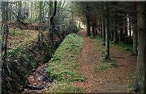 J4477 : Path, Cairn Wood near Belfast (1) by Albert Bridge