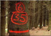 J4477 : Marked tree, Cairn Wood near Belfast by Albert Bridge