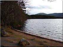 NH9718 : Across Loch Garten by Ian Paterson