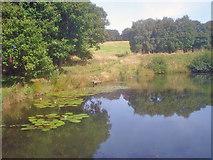 SK4563 : Row Pond - 1 by Trevor Rickard