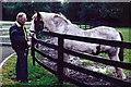 N7311 : Kildare - Irish National Stud Gelding by Suzanne Mischyshyn
