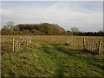 SP2504 : Track across the fields by andrew auger