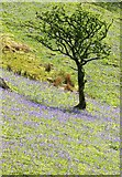 NY1618 : Rannerdale in the Spring by Cameraman