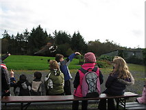 G6217 : Falconry display (Eagles Flying Bird Sanctuary) by Willie Duffin