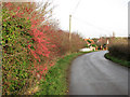 TM1598 : Colourful hedge on Wymondham Road by Evelyn Simak