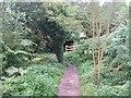 SJ4606 : Woodland path, Lyth Hill by Richard Webb