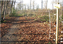 TM1497 : Lower Wood Nature Reserve - electric deer fence by Evelyn Simak