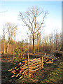 TM1498 : Lower Wood Nature Reserve - recent coppicing by Evelyn Simak
