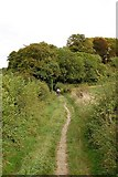 ST8412 : Path going up to Hambledon Hill by Clive Perrin