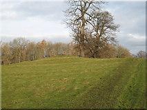 NZ2115 : Betty Watson's Hill near Piercebridge by Philip Barker