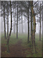 SO6921 : Track through trees in fog by Pauline E