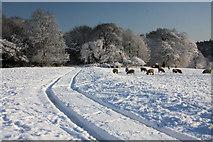 TL8063 : Track across Ickworth Park by Bob Jones