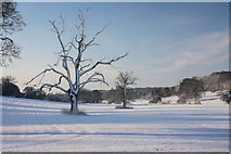 TL8162 : Isolated trees in Ickworth Park by Bob Jones