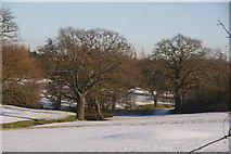TQ2996 : Trent Park, London N14 by Christine Matthews