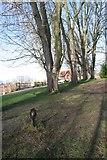 SU5980 : Trees by the lock by Bill Nicholls