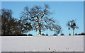 TL8160 : Snow-covered trees and parkland by Bob Jones