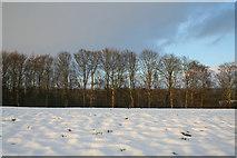 SE2968 : Snowy field by Mark Anderson
