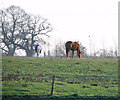 TF7413 : Horses grazing pasture south of the River Nar by Evelyn Simak