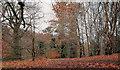 J3268 : Leafless trees, Barnett Demesne, Belfast by Albert Bridge