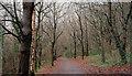 J3268 : Winter path, Barnett Demesne, Belfast by Albert Bridge