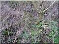 SU3788 : Brickwork in the weeds by Bill Nicholls
