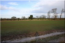 SP3369 : Field alongside A445 North of Cubbington by David P Howard