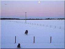 SM8819 : Moon, Bird, Dog & Horse by Deborah Tilley