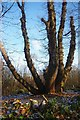 TQ6895 : Ancient Coppice in Norsey Wood by Glyn Baker