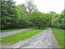 G8303 : Roadway in Rockingham Demesne by Oliver Dixon
