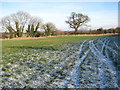 TM1496 : A frosty field west of Fundenhall by Evelyn Simak