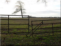 SP2604 : Gates into the field by andrew auger
