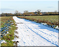TM3795 : Snowy road to Hales Green by Evelyn Simak