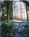 TM3696 : View into the woodland west of Hales Hall by Evelyn Simak