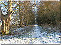 TM3696 : Path to Hales Green Common by Evelyn Simak