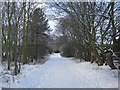 NZ2153 : Great North Forest Trail near Beamish by Les Hull