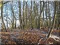 SE8448 : Bratt Wood near Nunburnholme, East Riding, Yorkshire by Eamon Curry