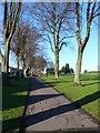 ST5971 : Windmill Hill Park by Nigel Mykura