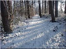 TQ2996 : Footpath through wood, Trent Park, London N14 by Christine Matthews