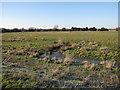 TL6173 : Wet grassland at Moor Farm by Hugh Venables