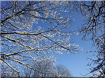 TQ2996 : Snow covered treetops, Trent Park, London N14 by Christine Matthews