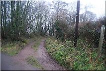 ST1337 : Footpath off Halsway Lane by N Chadwick