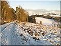 NT1888 : Forest road, Cullaloe Hills by Richard Webb